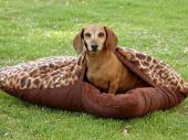 Dog Bed with Blanket